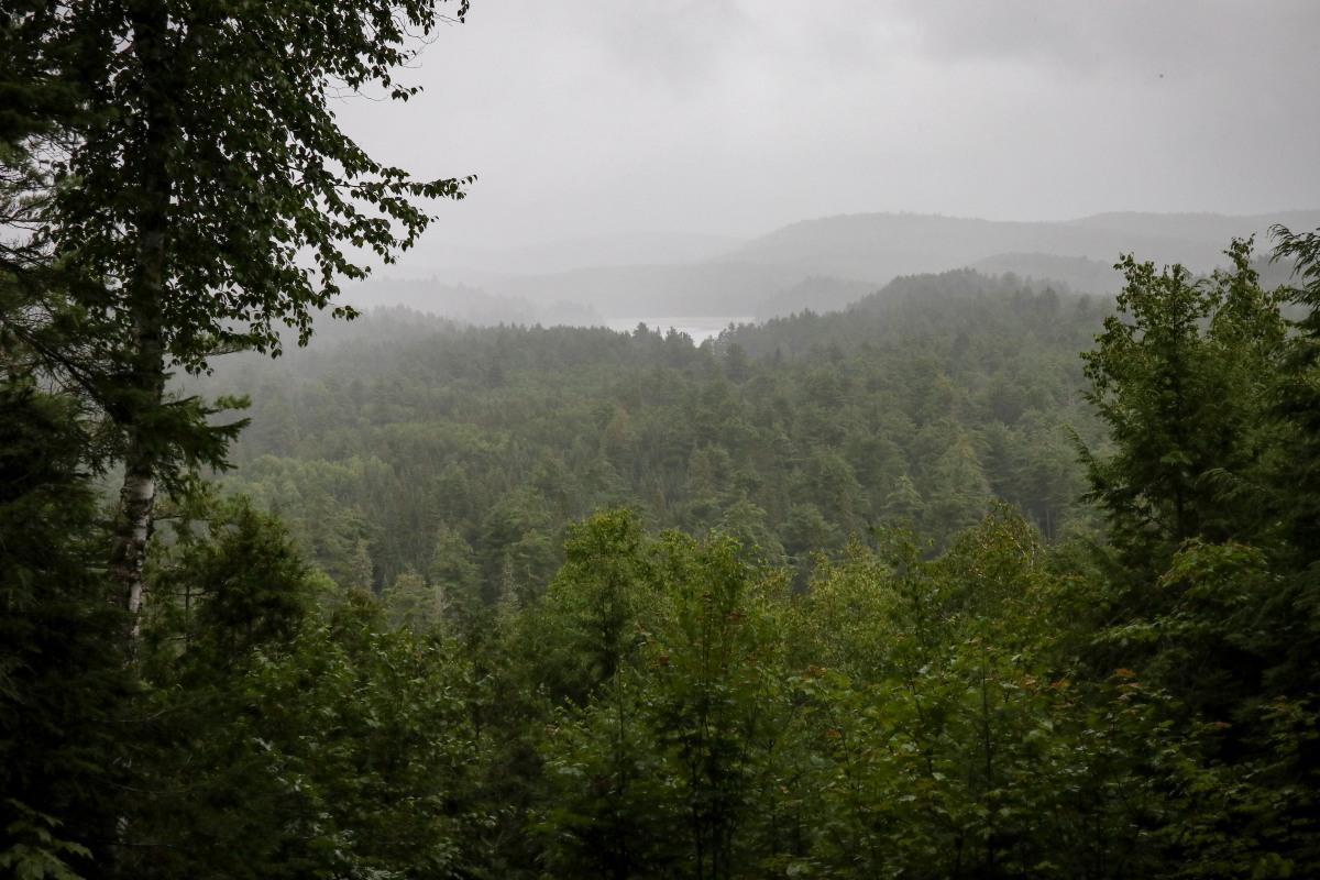 Wald in denLungen